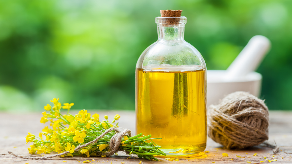 rapeseed_oil_448835143_1200px